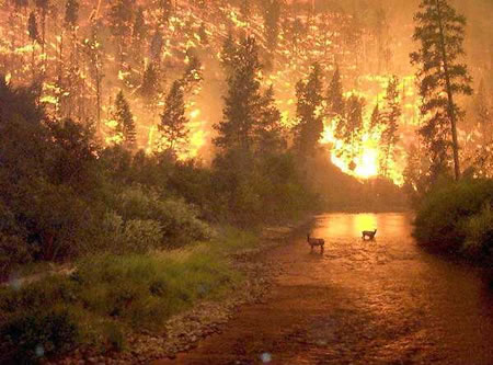 California_wildfire